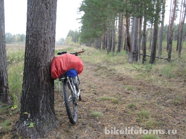 Велопоход за грибами в Завидово