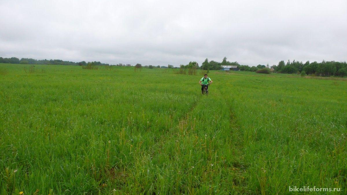 тут вполне можно выращивать рис