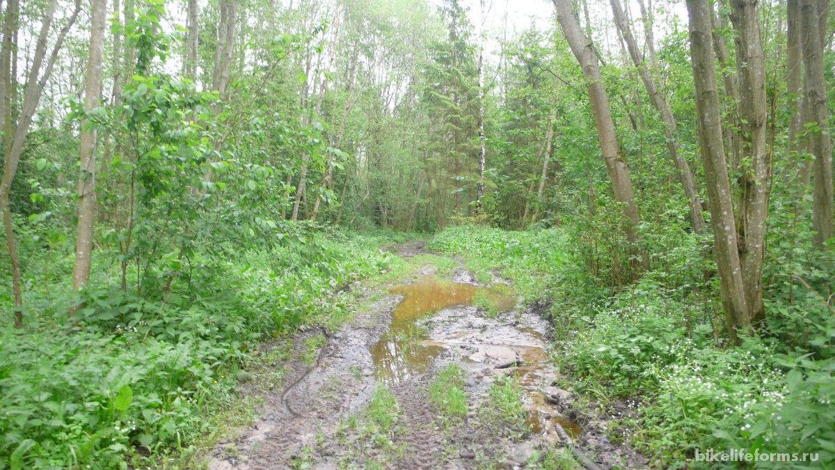 низина в лесу