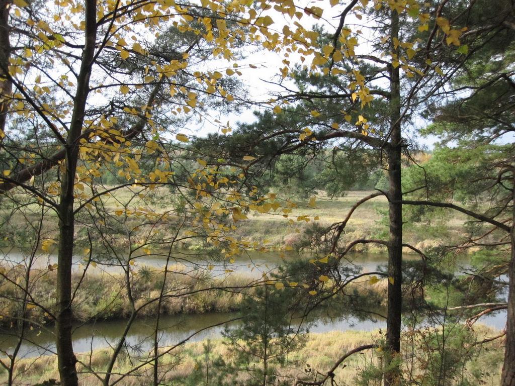 желтые листья, зеленая хвоя