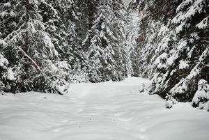 Сторожка Хопкина или как мы выбрались из снежного плена