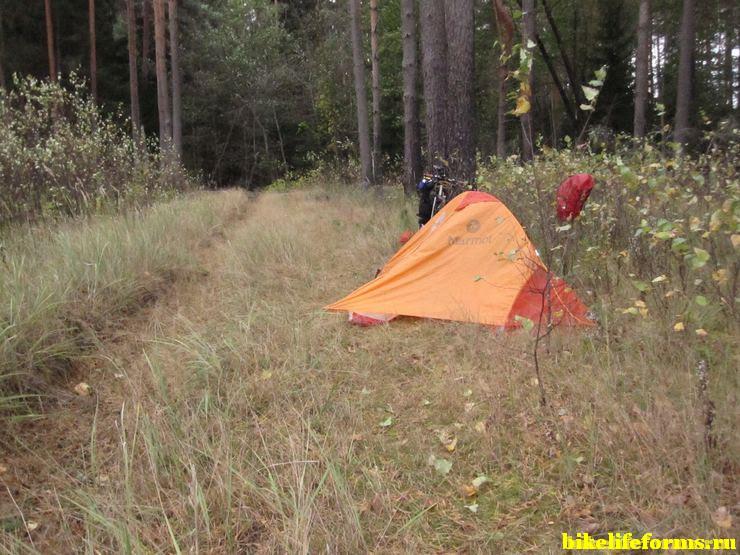 Палатка на заброшенной просеке  Завидовском заповеднике.