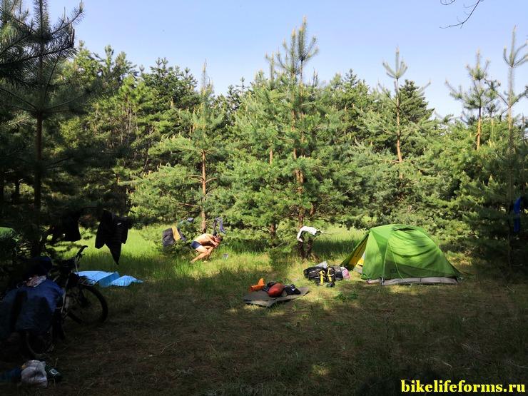 Ночевка в сосновых посадках, вблизи реки Калитва, Ростовская область.