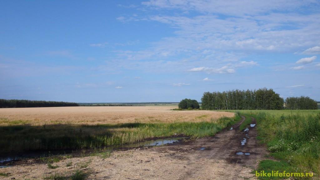 Сначала не погодилось, но потом летнее солнце  согрело наши московские души. Природа как никто другой - лучший лекарь.