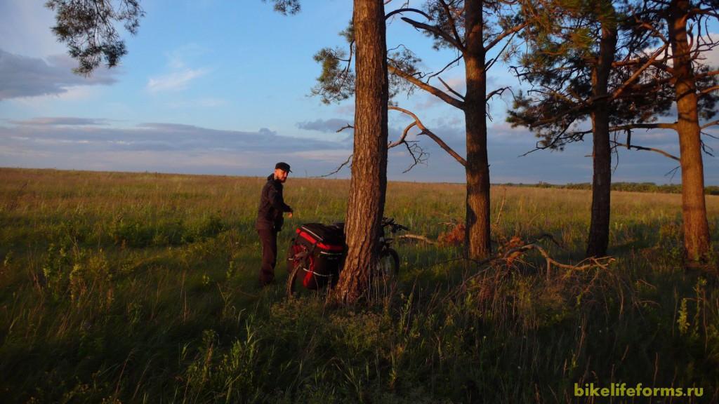 Сосновые посадки в поле - превосходное время для лагеря.