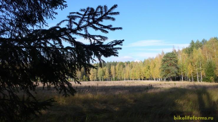 Телекомпания ВИД на опушку леса