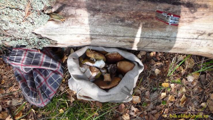 Полная сумка грибов