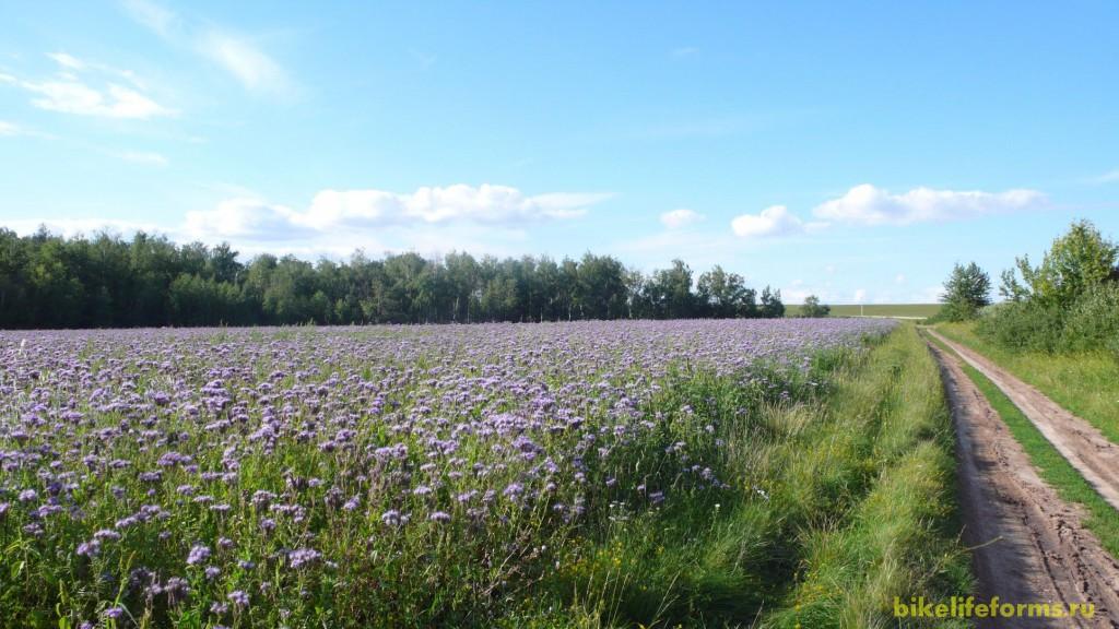 Запах этих цветов я буду помнить всю долгую зиму...