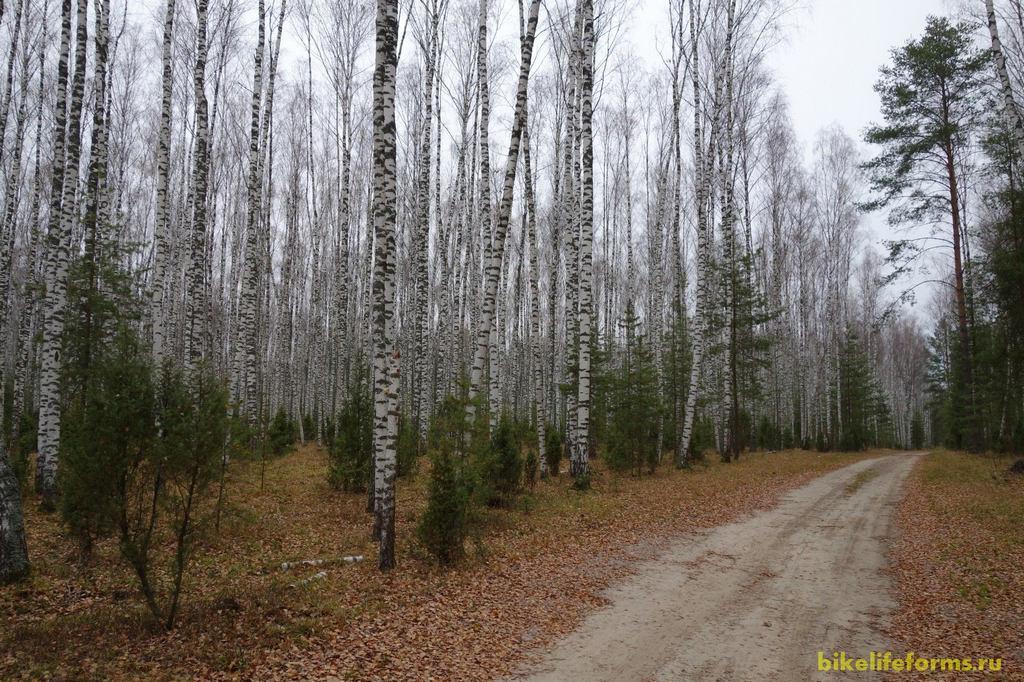 Скоро привал, после которого Максим с Андреем и Динарой поедут замыкать круг к машине, а мы с Димой покатим дальше и останемся ночевать в осеннем лесу.