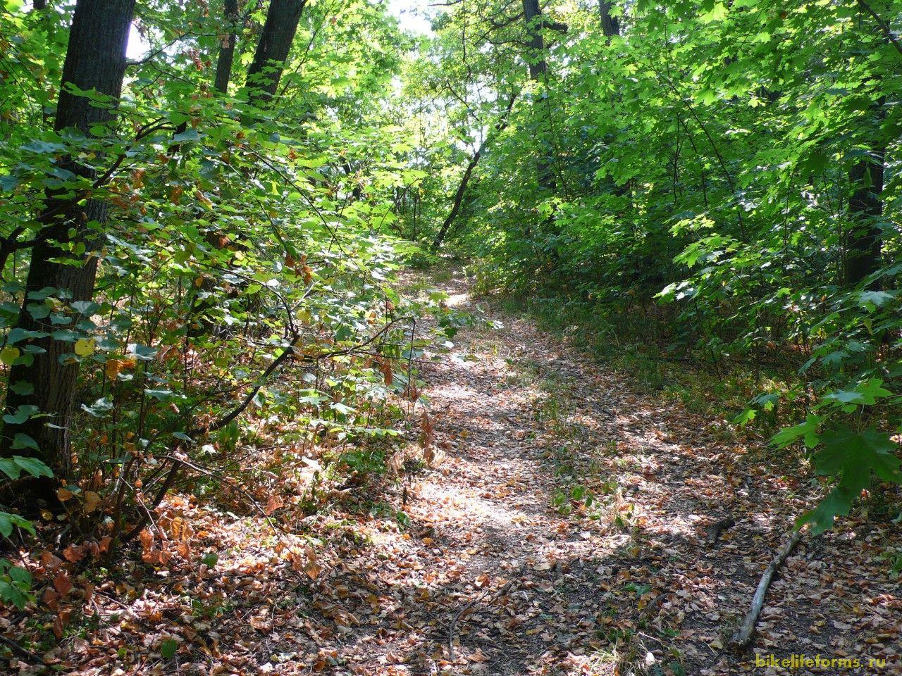 Иногда дорога заканчивалась, но мы не сдавались. На покорение данного небольшого лесного массива у нас ушло более 2 часов.