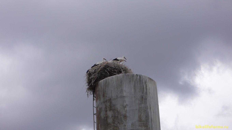 Аистам топлива не нужно. Да и ветер им нипочем. Свили свое гнездо в самом центре села.