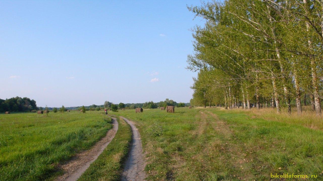 Заливные луга Дона, где мирно пасутся коровы.