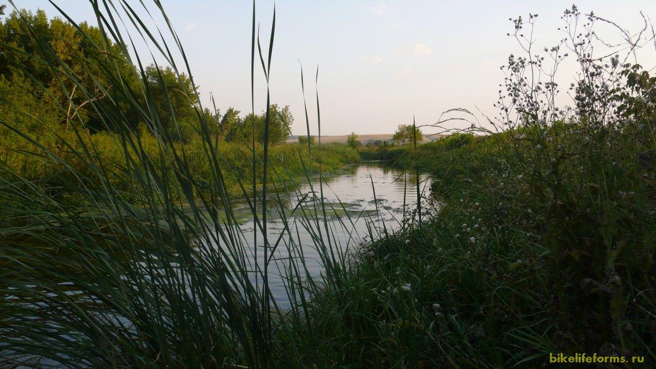 Тихая сосна, удивительно и действительно тихая речка. Течет тихо и спокойно. Душа здесь отдыхает. В голове от этого нет никаких мыслей.