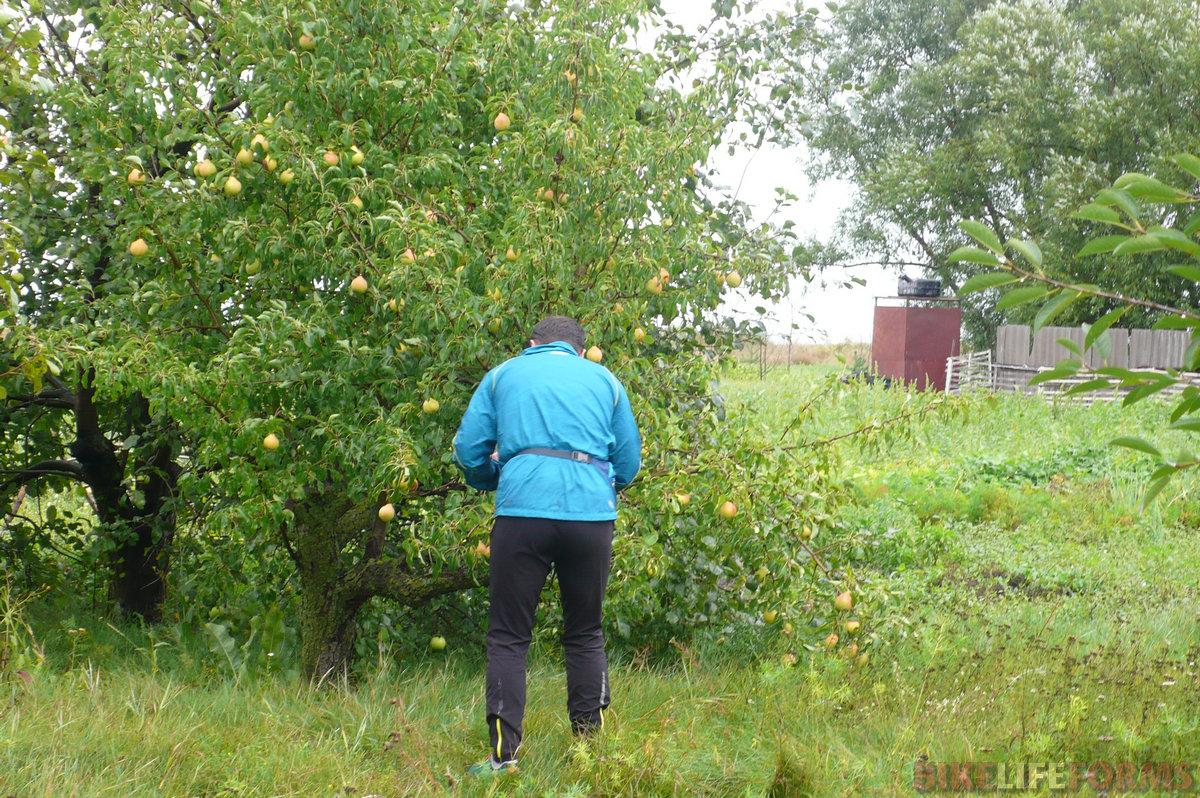 А вот и первая деревня. Набрали воды и приметили грушевое дерево. Полакомились и набрали с собой, пока хозяйка сего сада не пригорозила нам грозно кулаком.