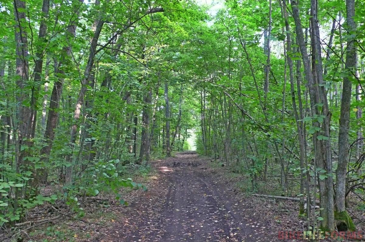 Вскоре дорога сворачивает в лес. Здесь куча наезженных троп. Кое-где вязнем и идем пешком, но в основном едем и приезждаем в тупик к речке Анна.