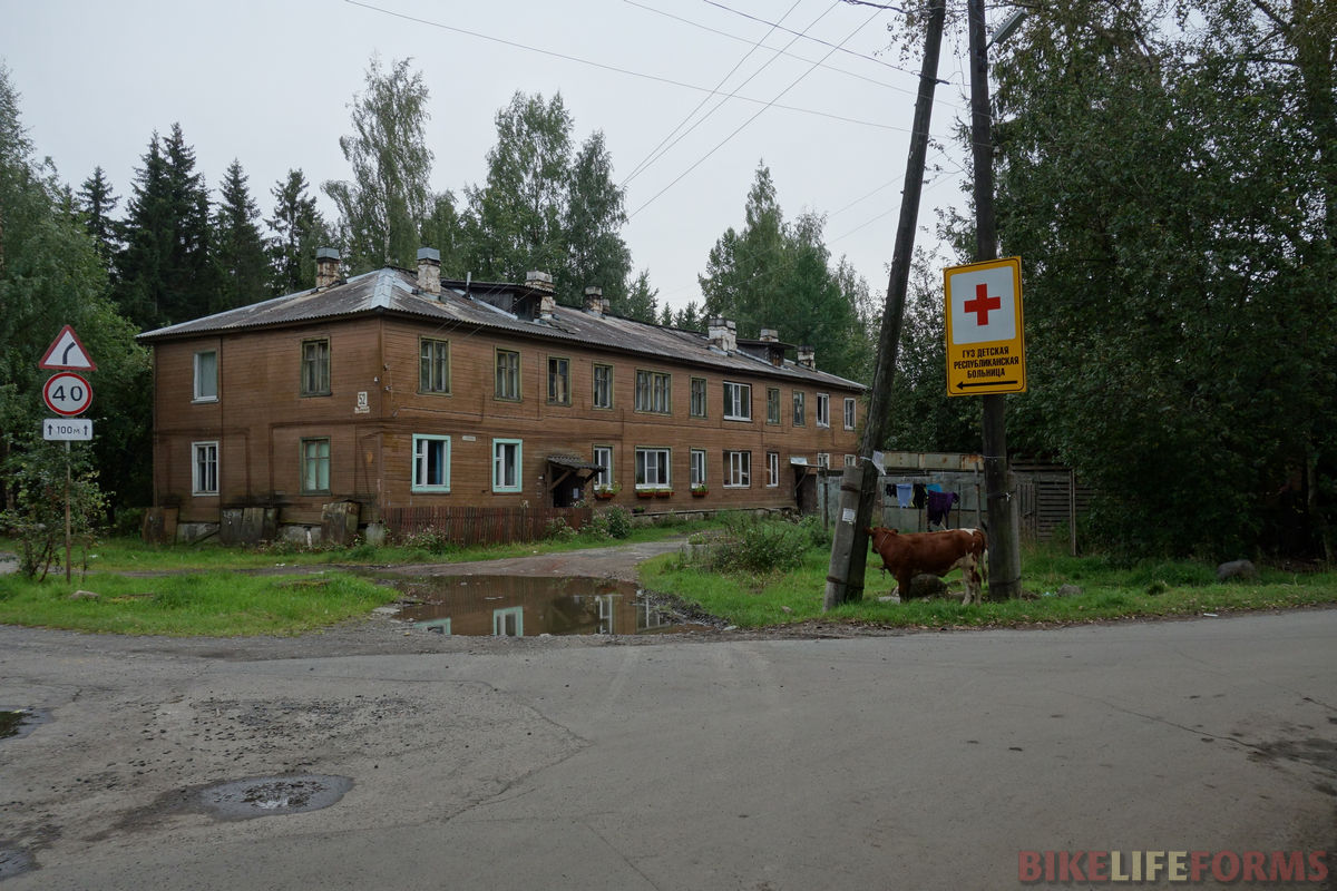 корова в столице Карелии - это нормально