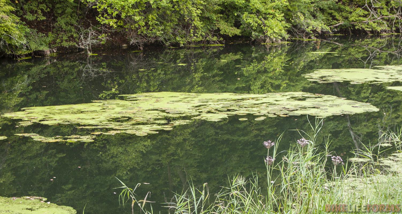 Плотина рядом, и Воргол стоит. Вода тут несколько теплее, чем в верховьях!