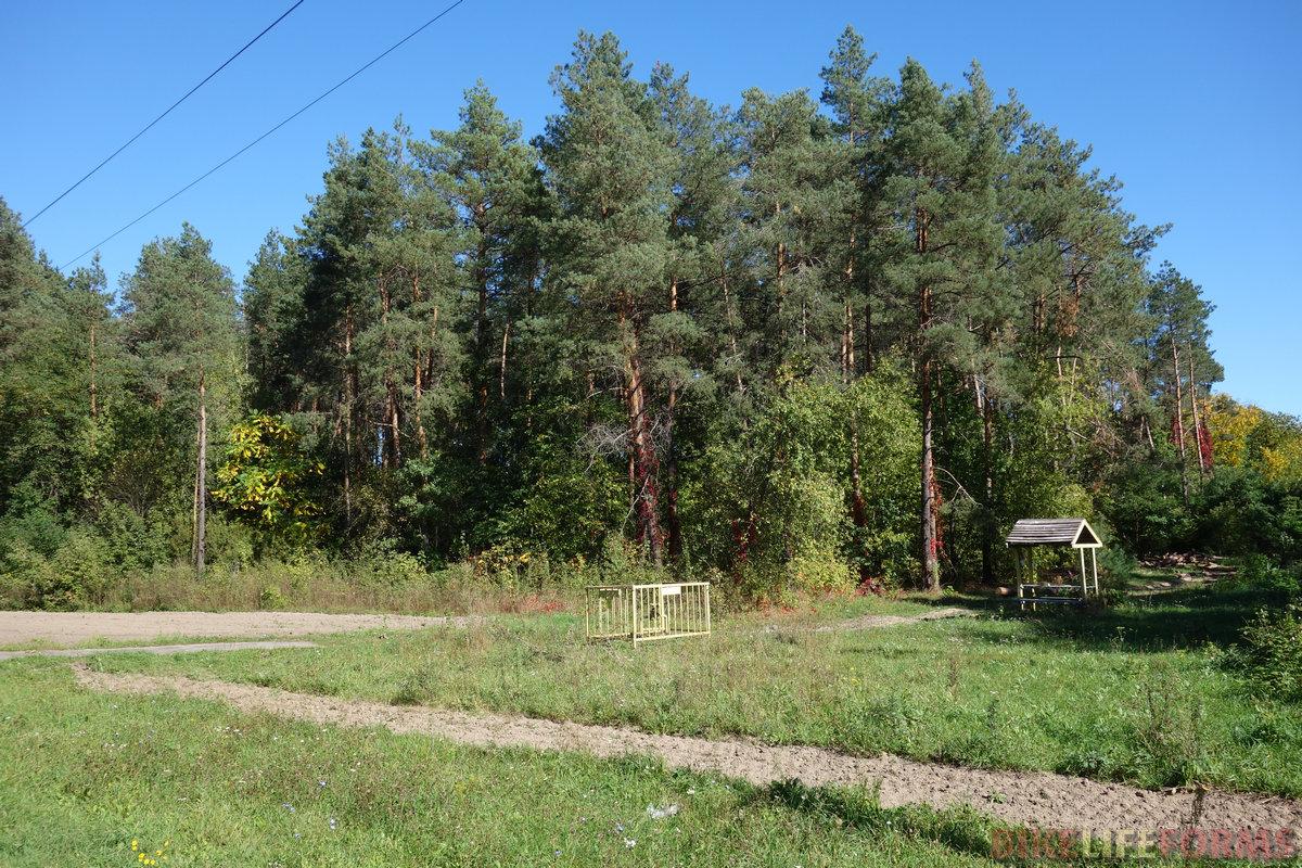 лес у Рыльска