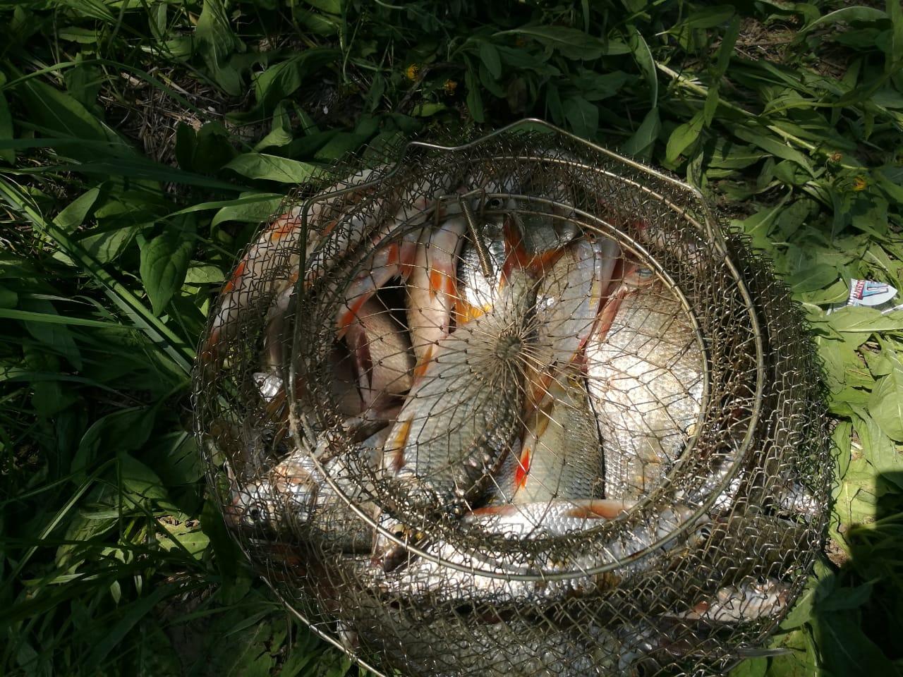 Поймали почти 7 кг. И так каждый день, купалка, лов рыбы, ее приготовление и другие приятные хлопоты привинциальной жизни.