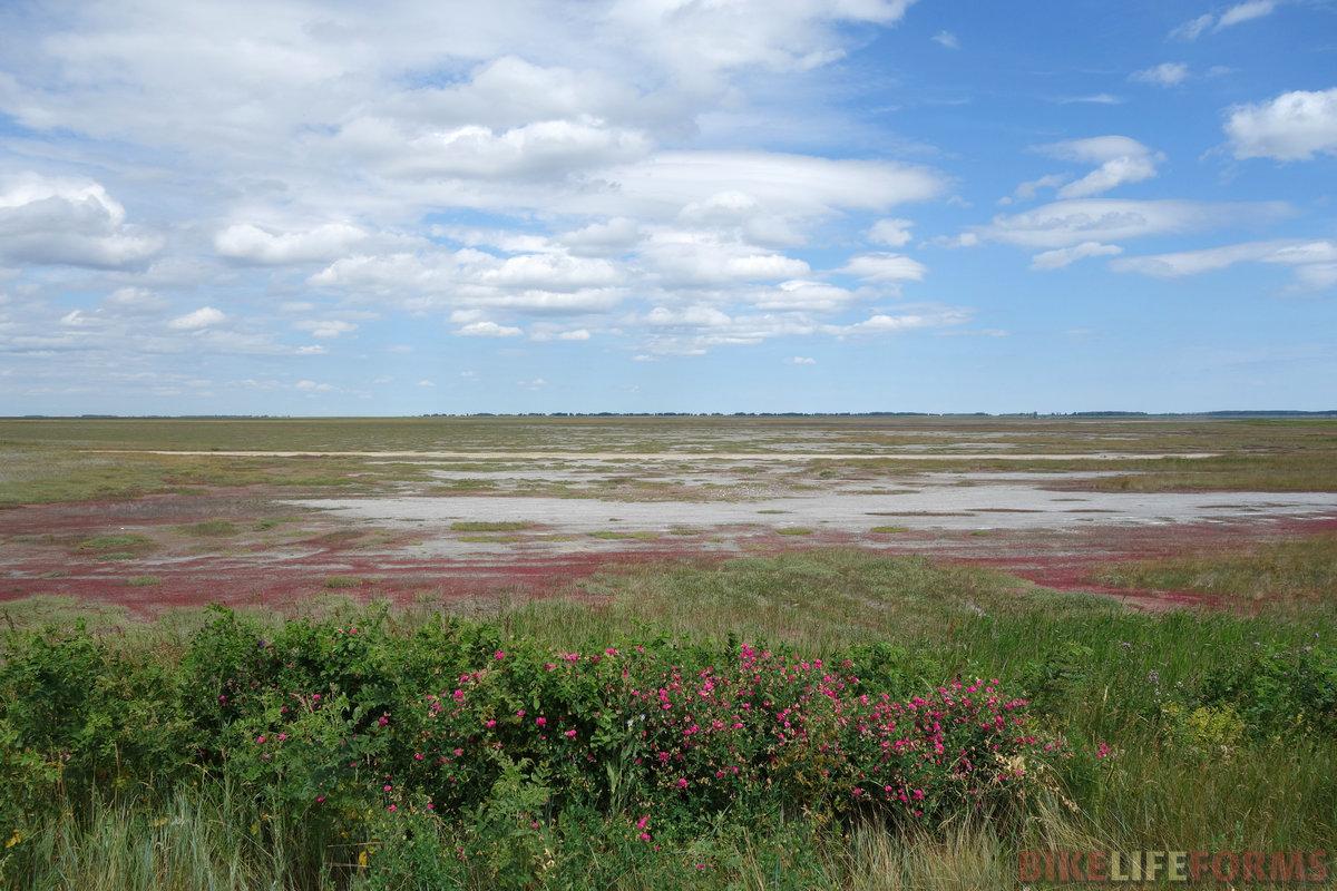 пересохшее соленое озеро Мочан