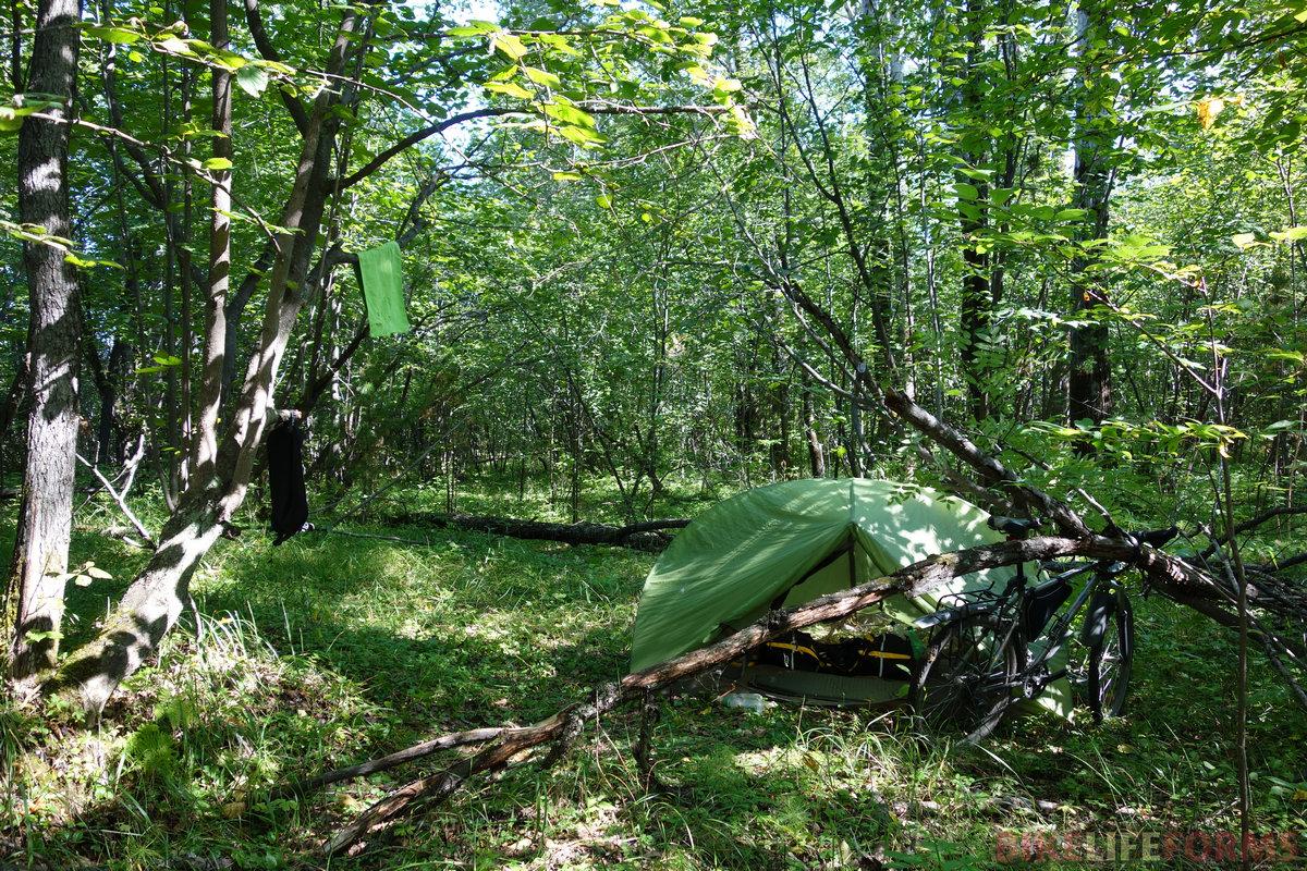 лес южного берега Байкала