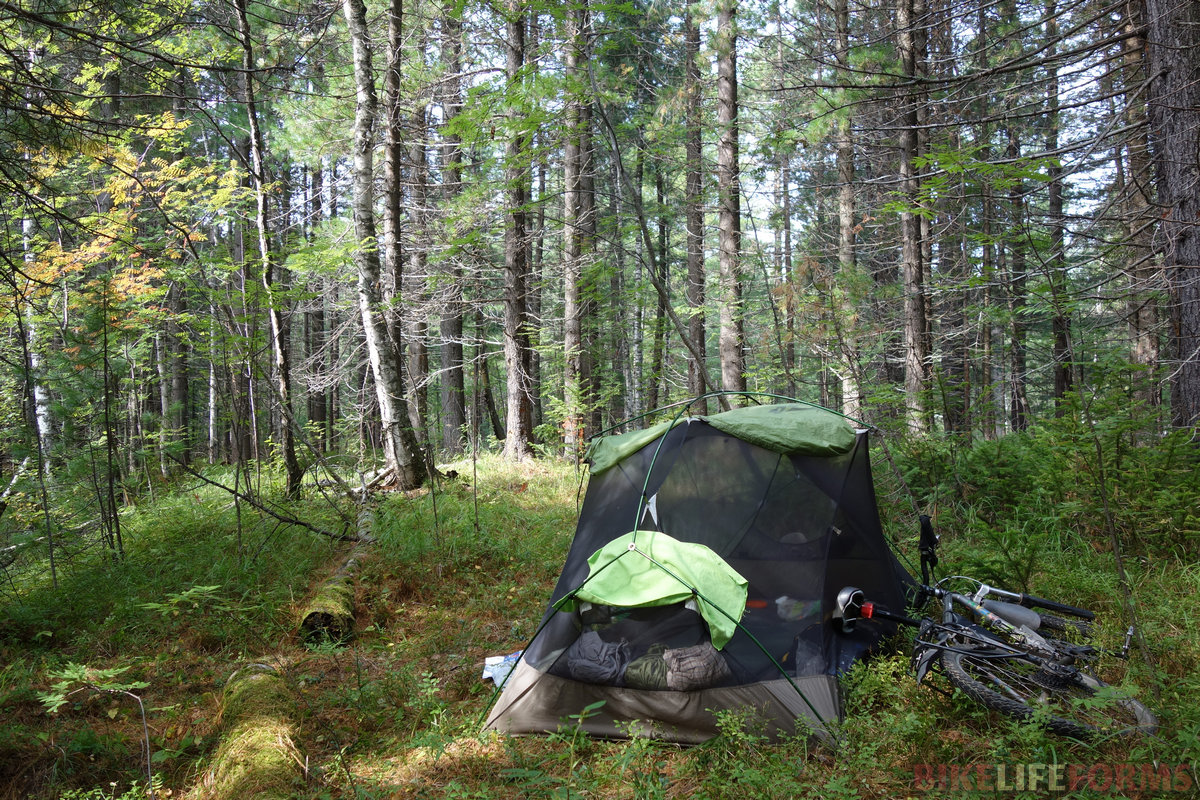 кедрухи в основном растут в горах, но изредка спускаются к Байкалу