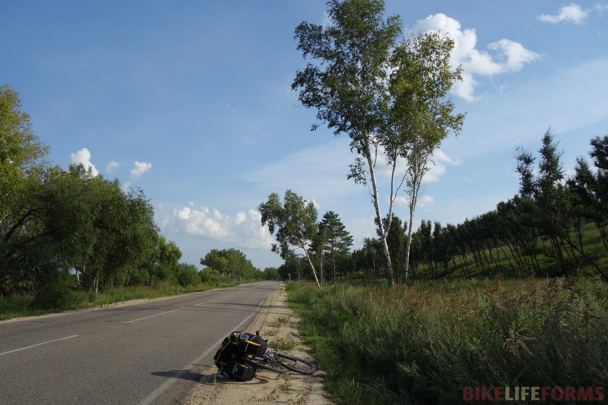 у местных деревьев сильно ветвятся кроны
