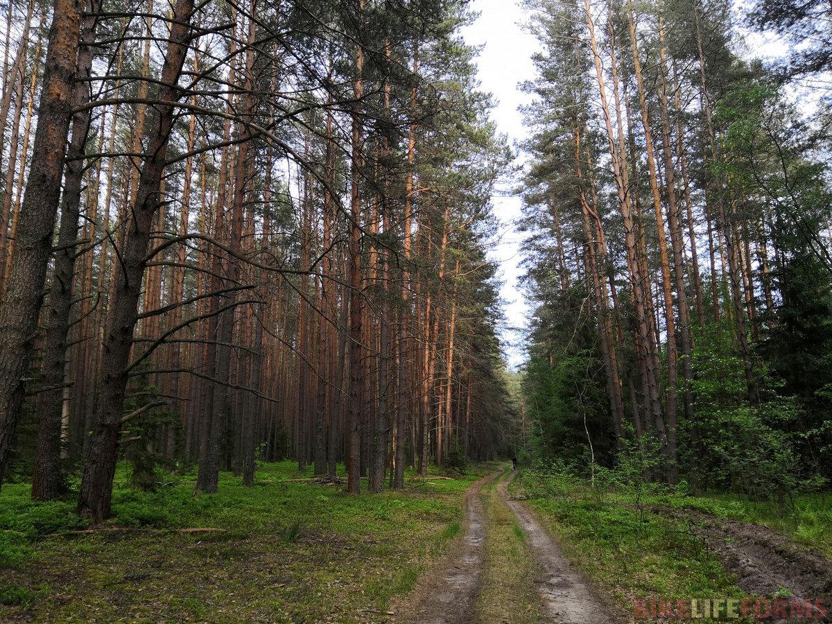 Дорога ведет в лес.