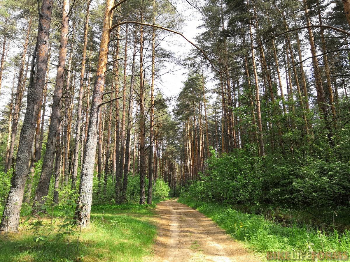 И снова дороги в сосновых лесах.