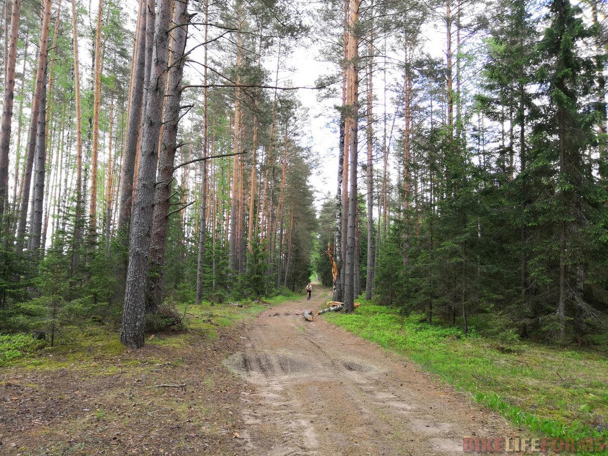Десятки километров  дорог в сосновых борах.