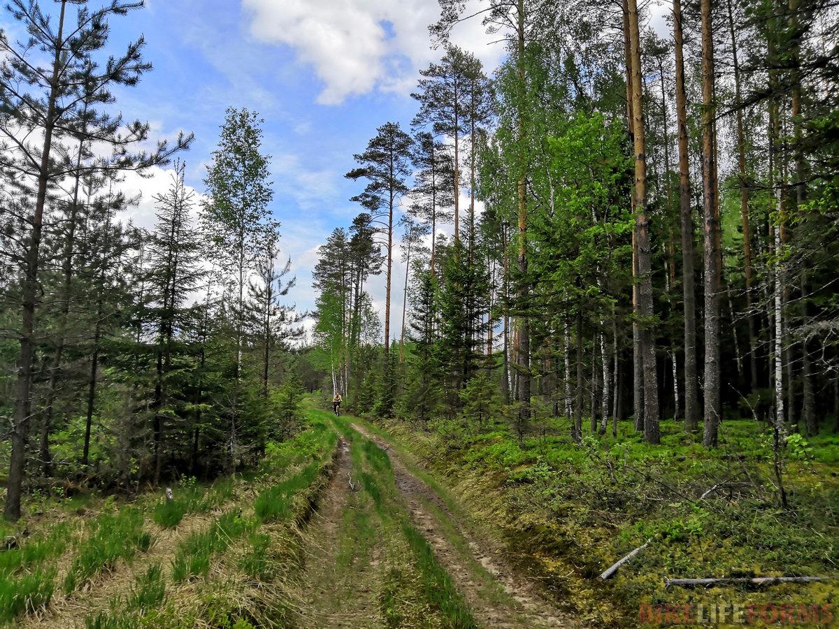 Леса, дороги, сосны, запахи и ТИШИНА.