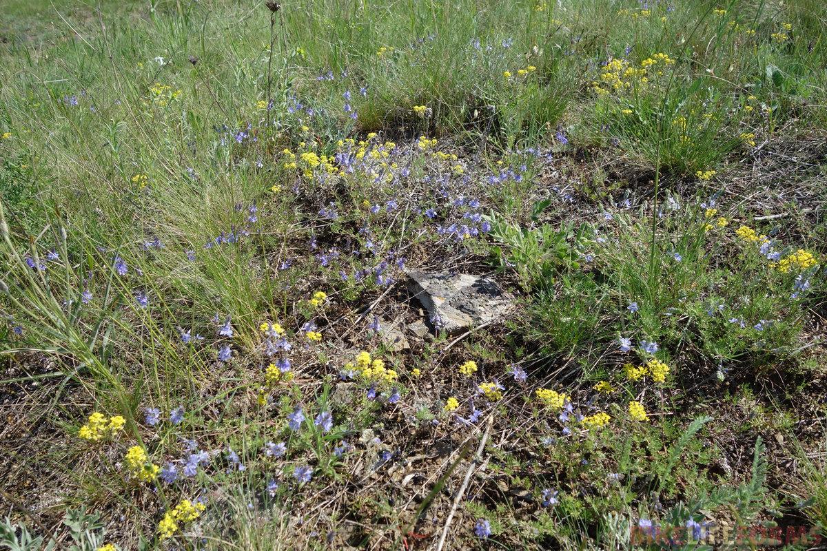 степное разноцветье
