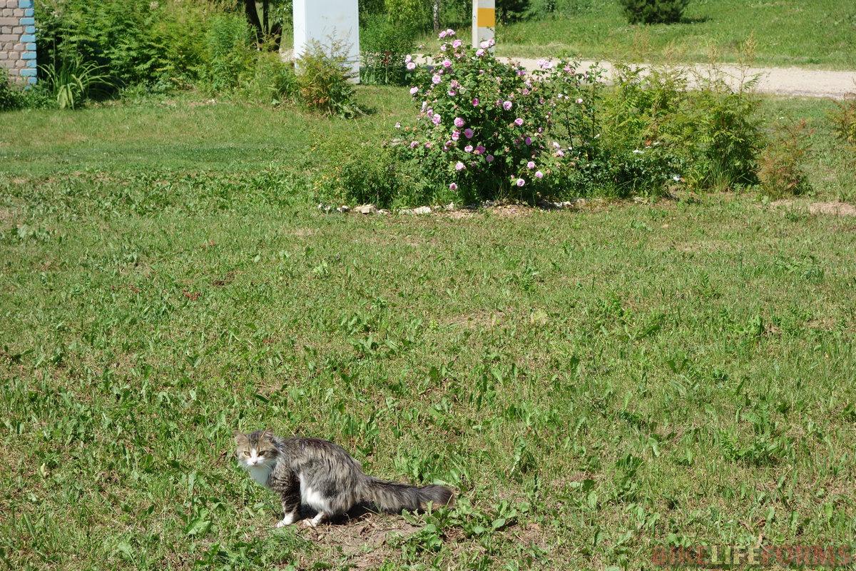 кот на месте преступления