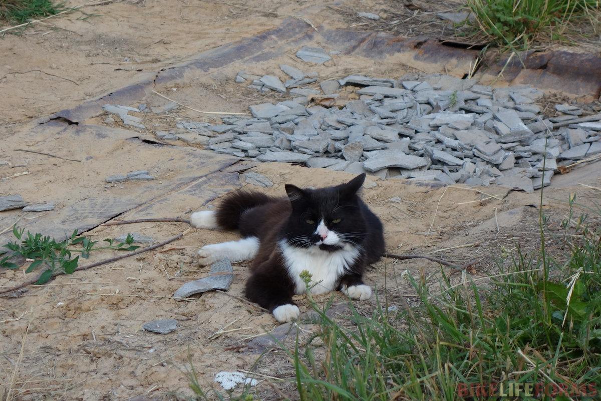 однако мыши водятся, и без кота жизнь не та :)
