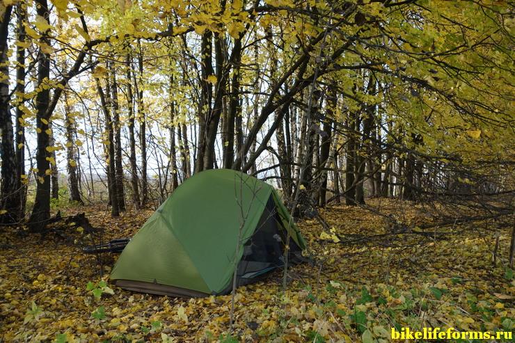 лесополоса в Тульской области, начало октября