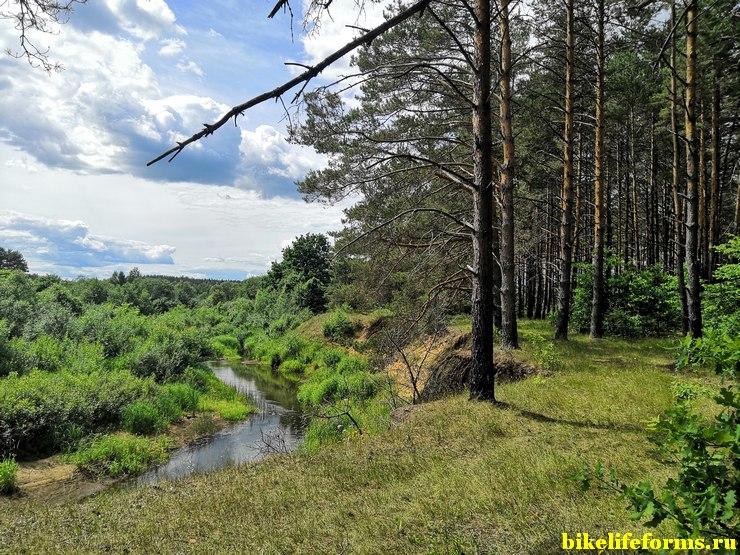 Сосновые боры, вдоль реки Шоша.