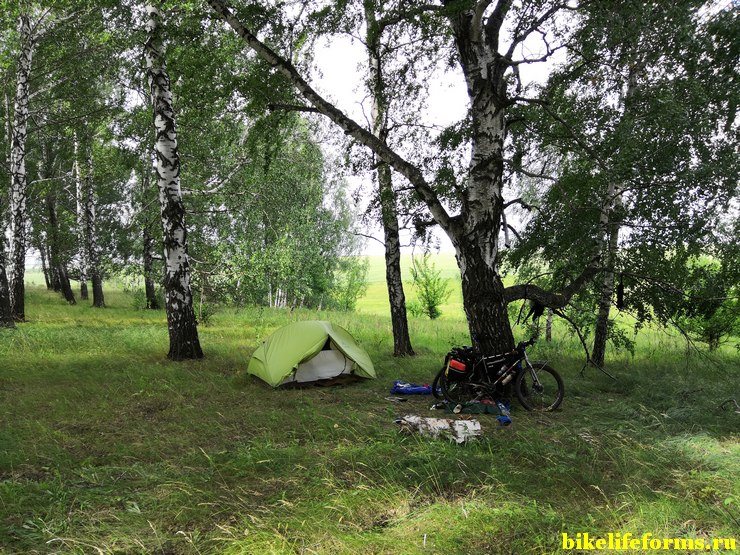 Липецкая область, ночевка в березовой рощи в 1 км от грунтовой дороги.