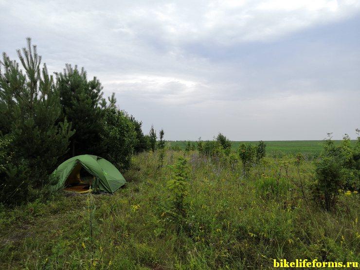 Стоянка на окраине сосновых посадок в Липецкой области.