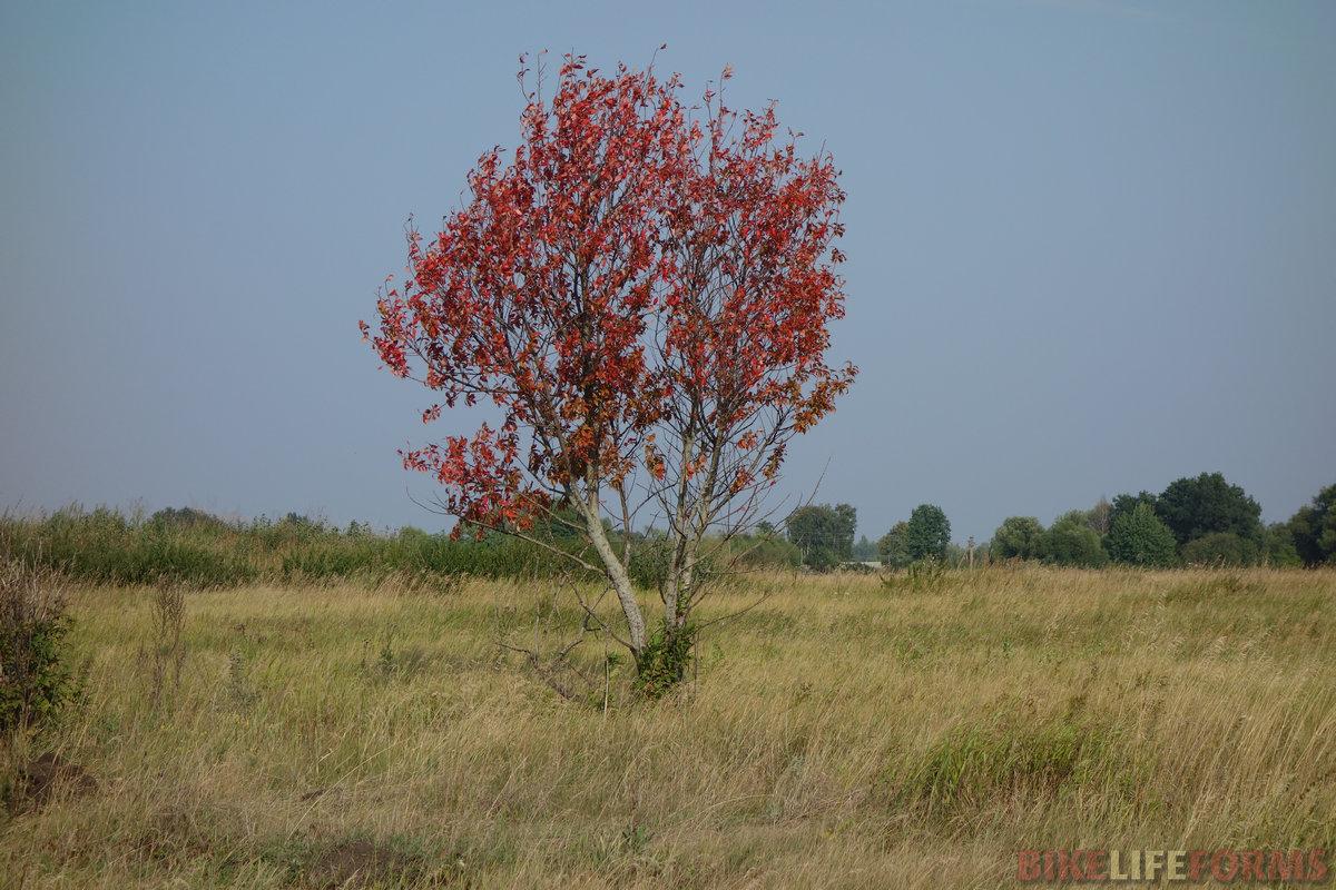 чудит безумная планета. Не стоит больше на погоду уповать: сначала осень среди лета, потом зеленая январская трава