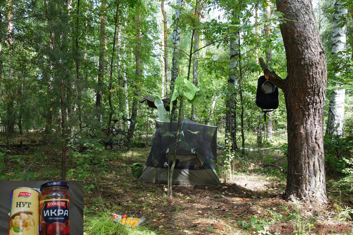 ароматнейший смешанный лес! но много сухих берез. Водятся грибники