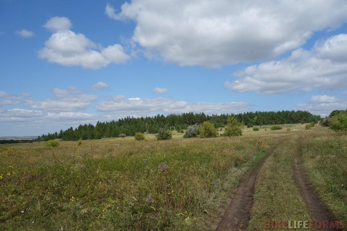 вот они, сосновые посадки, укрепляющие холм