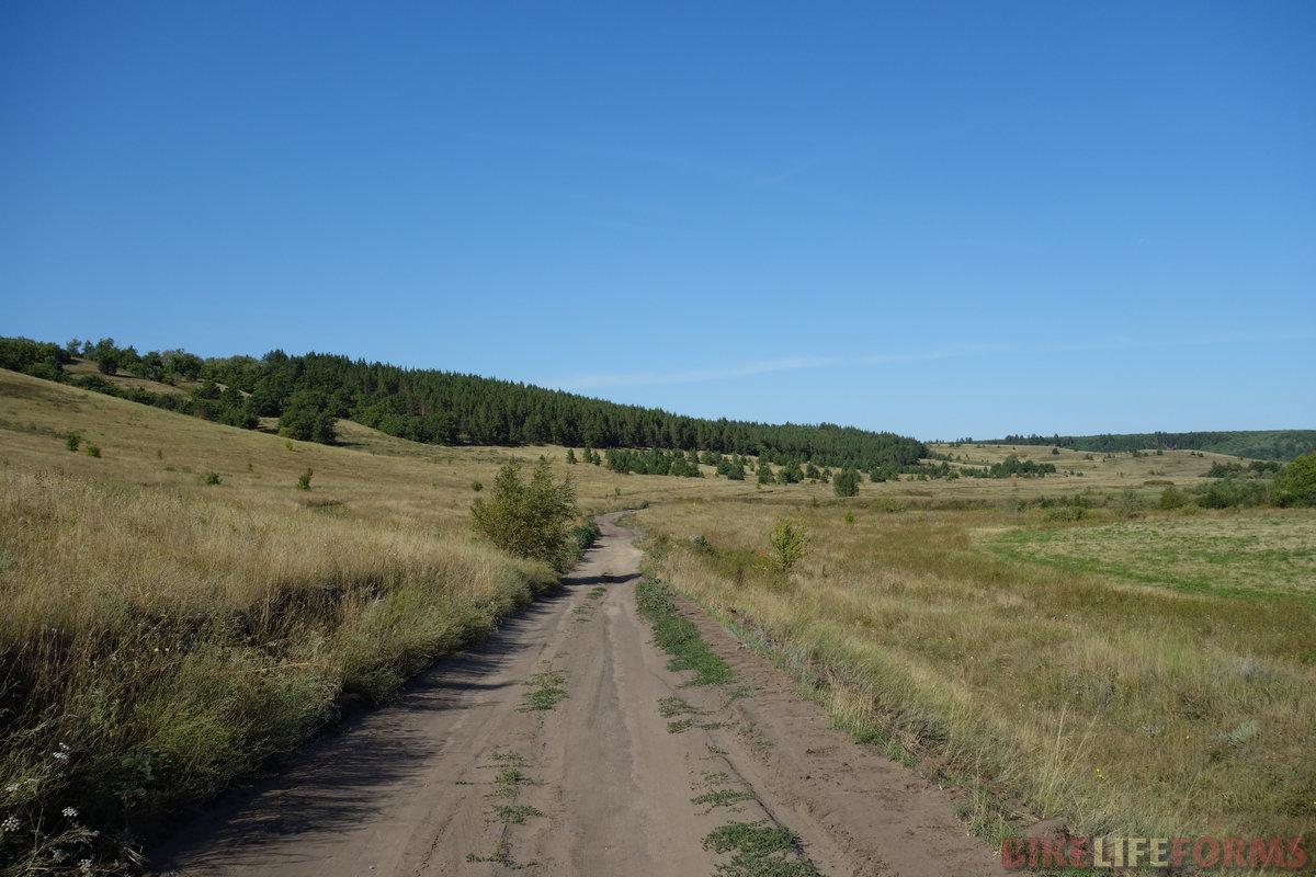 участки коренных дубрав соседствуют с посадками сосен
