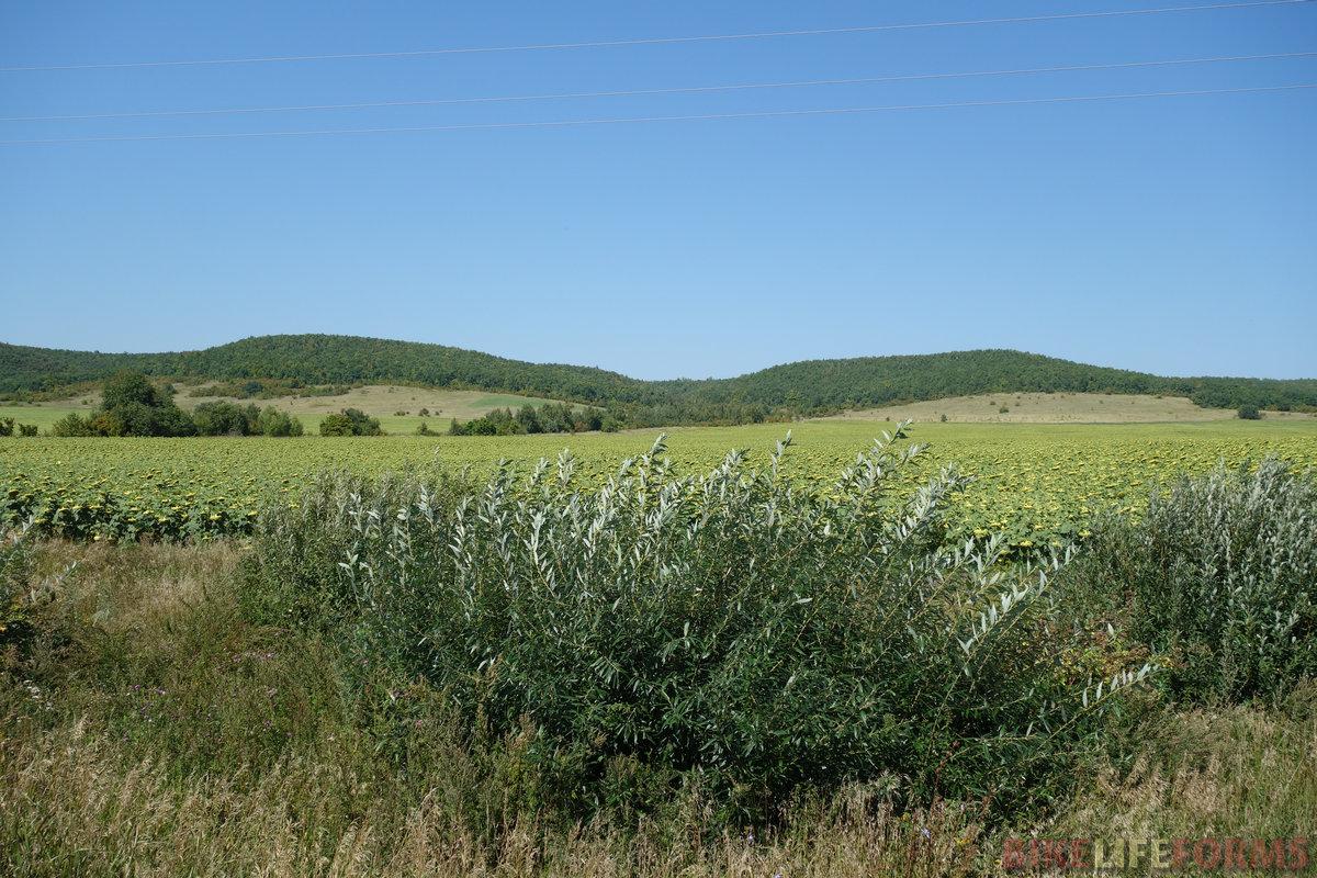 вот эти труднопроходимые леса, укрывшие шапками пологие холмы и седловины
