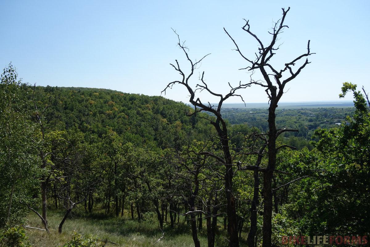 удивительно, как этот дубовый склон мне напомнил юг Приморского края!