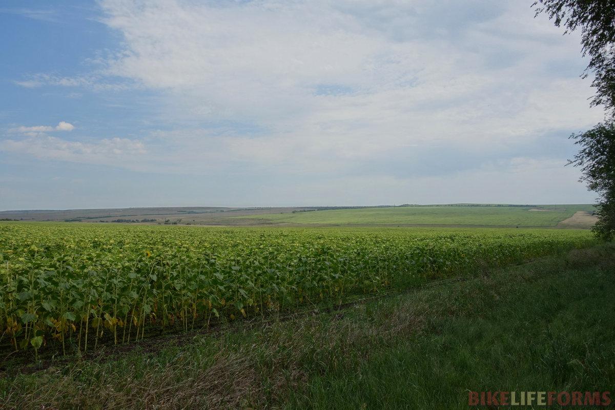 до ближайшей дороги пришлось идти по траве более 2 км