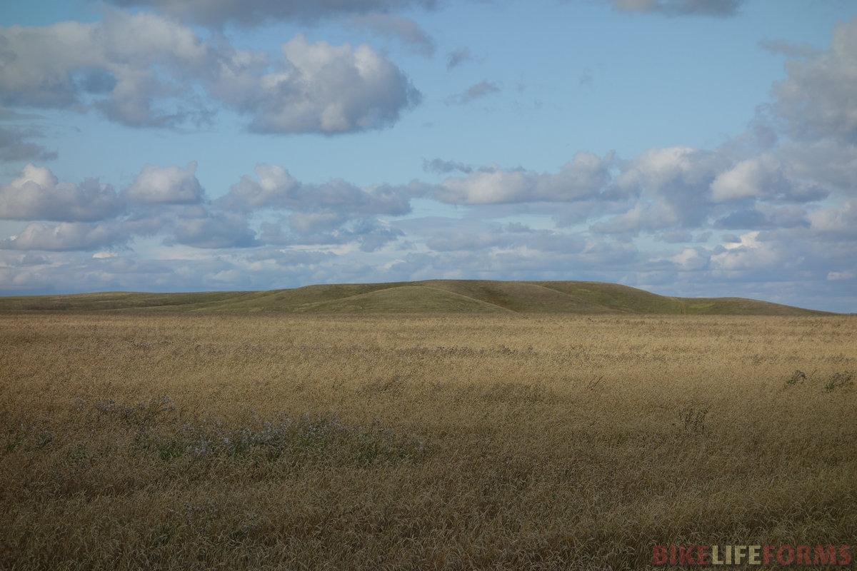 поле спелой ржи. И странные лысые холмы