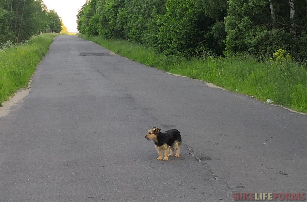 одинокое собако