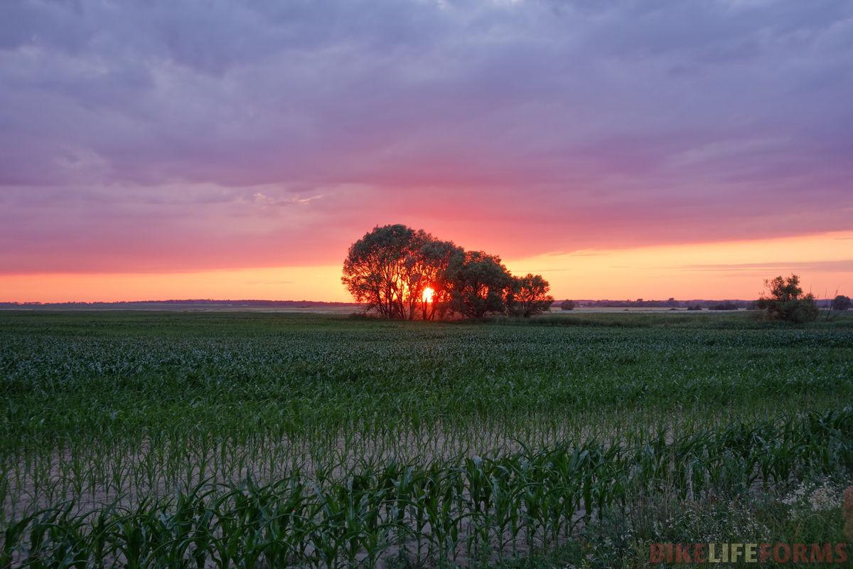 кукурузный закат