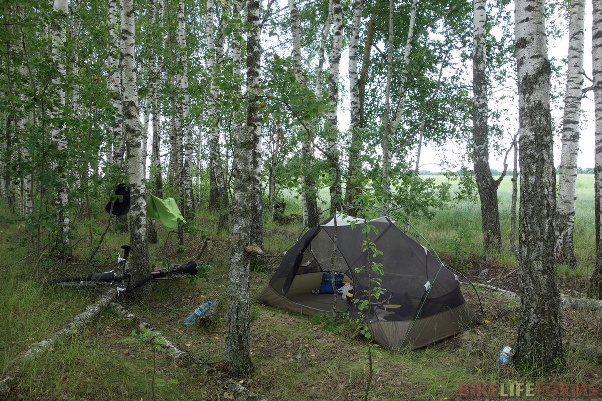 палатка в полосе берез