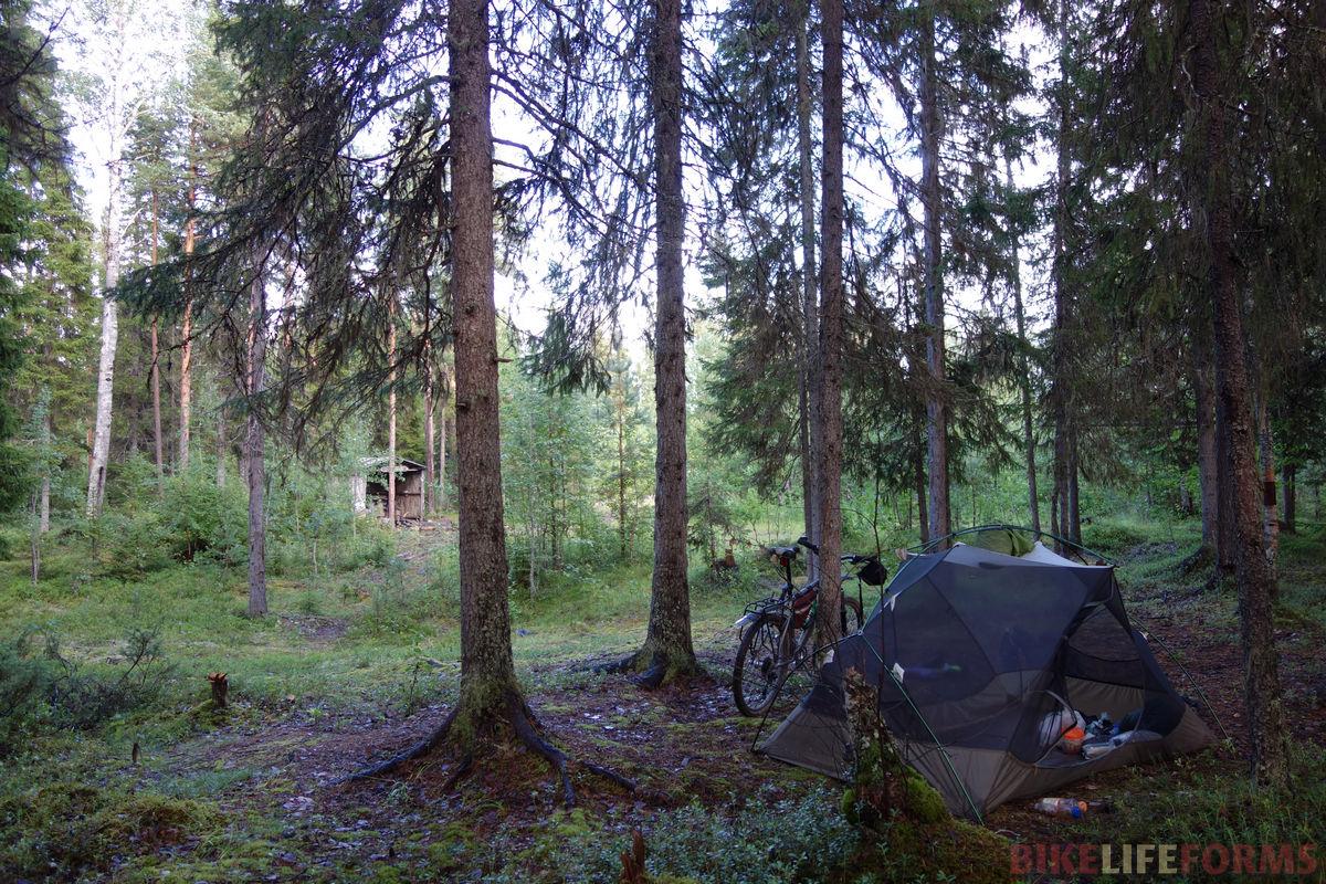 палатка под елями